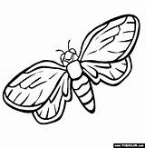 Coloring Pages Insect Cicada Firefly Drawing Preschool Printable Animals Getdrawings Regreso Palabra Del El La Worksheets Jul Kindergarten sketch template