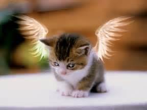 kitty cat kitty cat kitty cat wallpaper