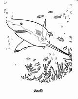Shark Coloring Pages Books Print 4creative Sheets Source sketch template