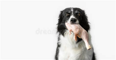Dog Meat Stock Image Hungry Obedience