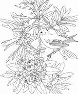 Paradise Bird Flower Drawing Coloring Pages Tropical Beach Road Getdrawings sketch template