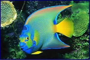 Quia - Fish Identification EKO 3
