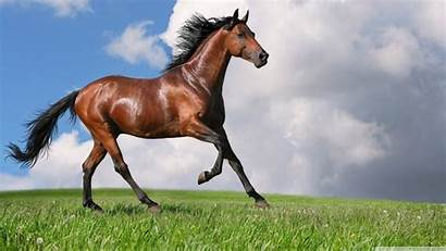 Horse Running Seven Desktop Wallpapers Fullscreen Definition