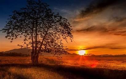 Malaysia Screen Sunset Desktop Wallpapers Nature Tree