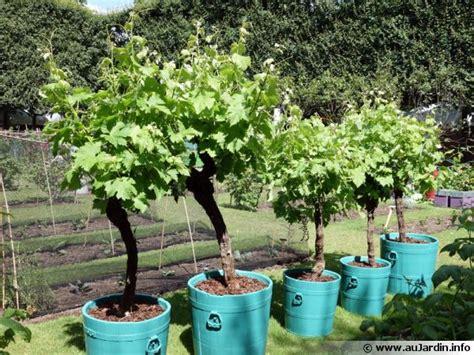 au bureau englos acheter cep de vigne en pot 28 images cep de vigne