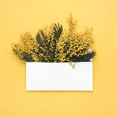 rami di fiori rami di fiori gialli in busta scaricare foto gratis
