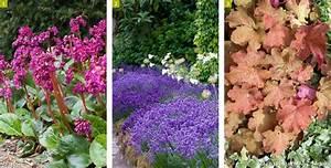 Plante De Bordure : tout savoir sur les plantes de bordure d tente jardin ~ Preciouscoupons.com Idées de Décoration