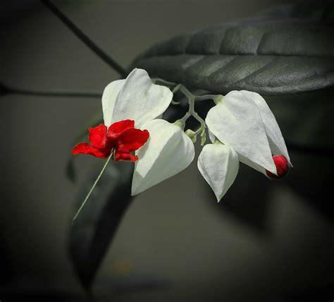 picture macro leaf flower flora beautiful