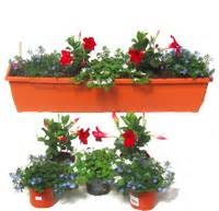 Pflanzen Für Balkonkästen Sonnig : bepflanzte balkonk sten pflanzen versand harro 39 s pflanzenwelt kaufen bestellen online ~ Bigdaddyawards.com Haus und Dekorationen