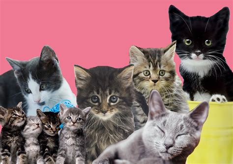 cat metro why cats having reasons getty cute scientifically proven pussy credit re they should