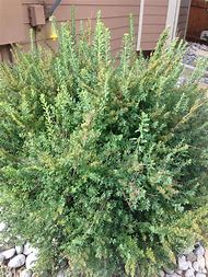 Best shrub identification ideas and images on bing find what you small white flowering shrub identification mightylinksfo