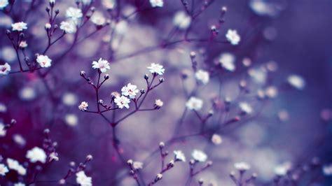 flowers purple blur wallpaper