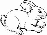Rabbit Coloring Pages Bunny Animals Drawing Drawings Animal Sheet Template Wildlife Zum sketch template