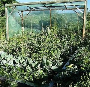Gewächshaus Für Tomaten Selber Bauen : kraut r ben forum tomaten 2010 ~ Markanthonyermac.com Haus und Dekorationen
