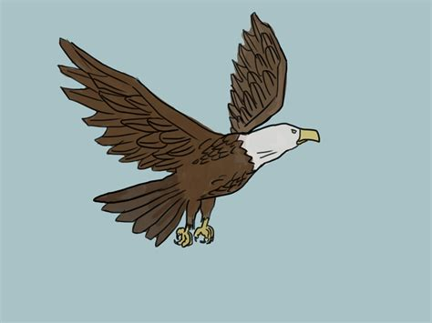 kumpulan mewarnai gambar sketsa elang berwarna