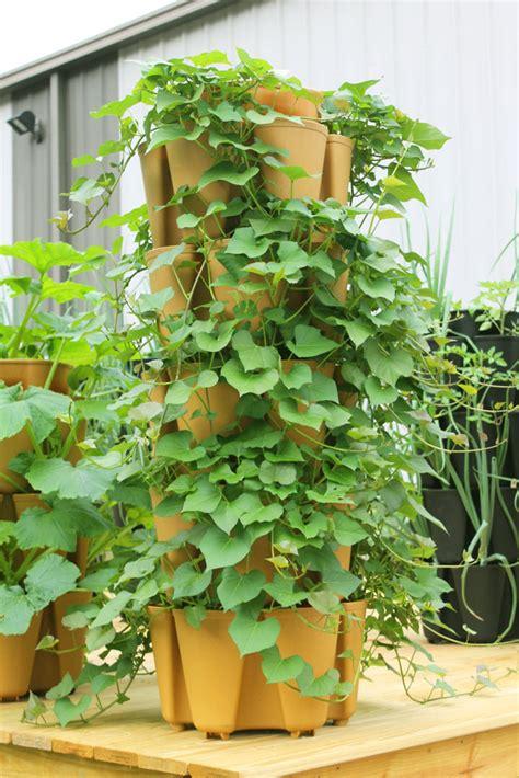 What Can You Grow In A Vertical Garden by Community Vertical Garden Stackable Gardening