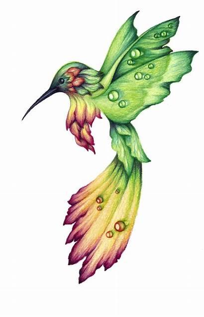 Hummingbird Drawing Drawings Bird Tattoo Birds Clipart