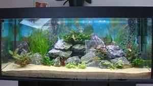 Aquarium Einrichten 60l : ber 200l 240l becken ist besatz noch okay aquarium forum ~ Michelbontemps.com Haus und Dekorationen