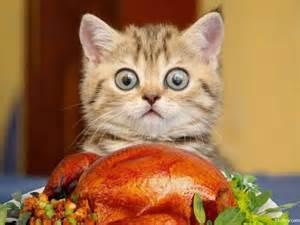 thanksgiving cat thanksgiving cats from mscott5903