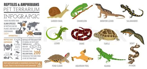 Pet reptiles and amphibians icon set Stock Vector