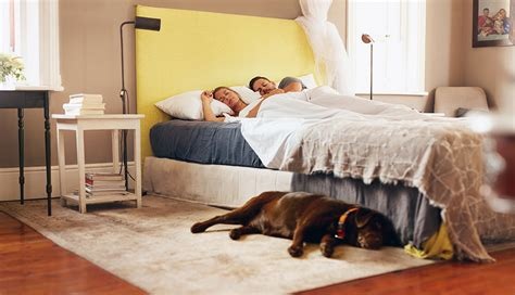 Study Says You May Sleep Better With Your Dog Nearby
