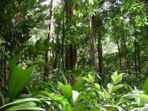 Rainforest | Global Whisperer