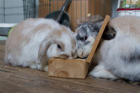 beschaeftigung kaninchenhilfe deutschland ev aktiv