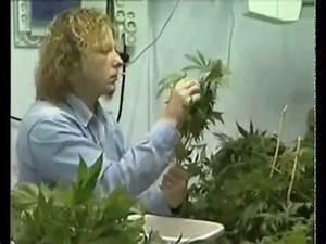 Culture Indoor Cannabis Fabrication D39une Chambre De