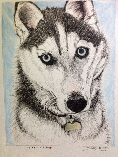 Husky Drawing By Darby Davey Husky Husky Drawing Art