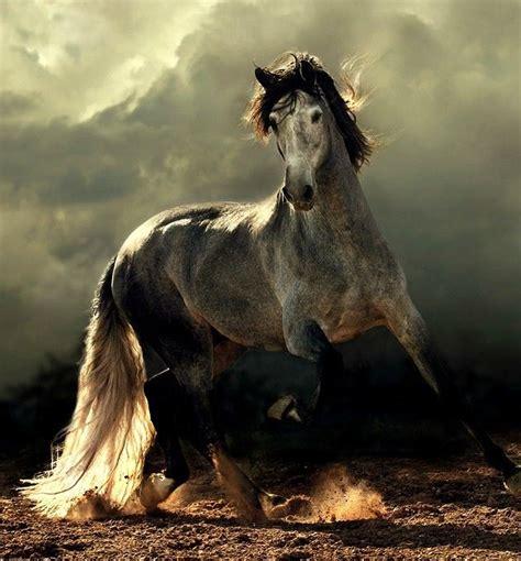horses majestic horse heaven lopez pinned ea