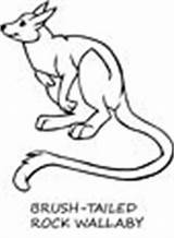 Wallaby Coloring Animals sketch template