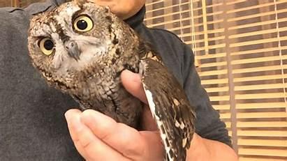Owl Critters Pet Cutest Head Turn Afkomstig