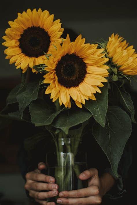 engaging sunflowers  pexels  stock