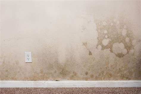 mold resistant drywall mold resistant drywall guarantees a mold free house
