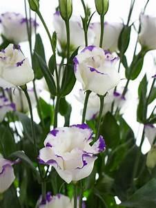 Welche Blumen Blühen Im August : die 25 besten ideen zu lilafarbene hochzeitsblumen auf pinterest lila blumen lila ~ Orissabook.com Haus und Dekorationen