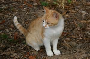 flea shoo for cats lost one of feral cats at vets today