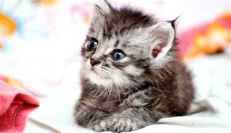 Cats To Go! New Zealand Man Calls For Pet Cats To Be