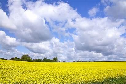 Langit Pemandangan Siang Gambar Tanah Pertanian Bidang