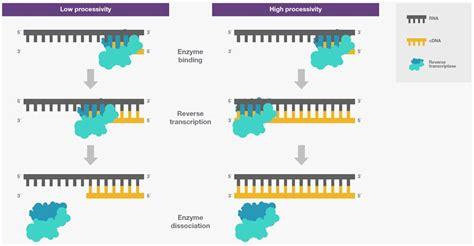 Reverse Transcriptase Attributes   Thermo Fisher Scientific
