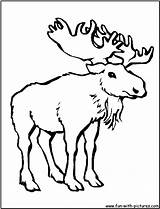 Moose Coloring Pages Cartoon Thidwick Hearted Outline Printable Animals Drawing Colouring Realistic Sheet Getcolorings Fun 1050 Popular Colori sketch template