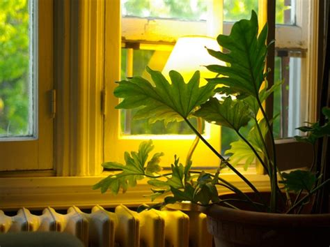 fiches cuisine plantes d 39 intérieur pour l 39 ombre