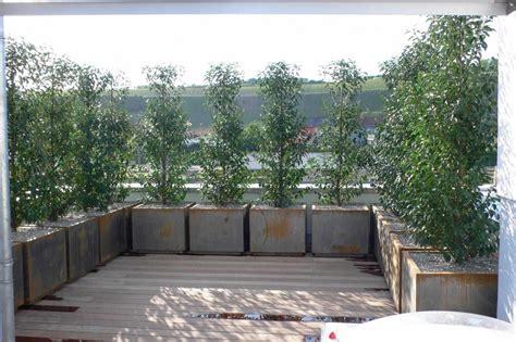Sichtschutz Garten Und Terrasse by Welche Pflanzen Sichtschutz Garten Terrasse Greenvirals