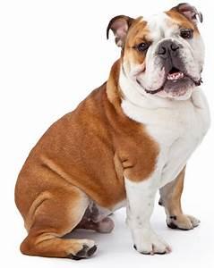 adult dog training keep it cute dog training arlington va With adult dog training