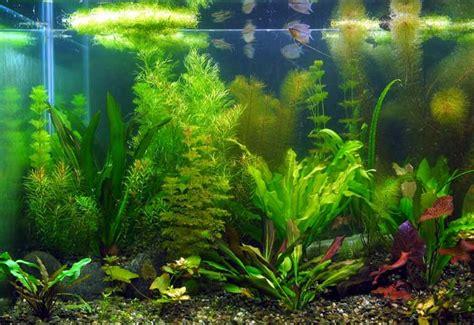of your aquarium aquarium plants aquatic plants aquarium images