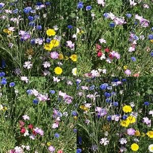 Bouquet de fleurs des champs bonnard for Ou acheter le tapis champ de fleurs