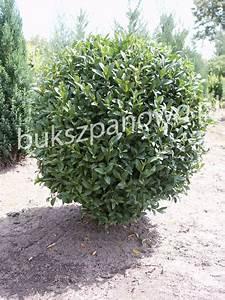 Wann Wird Lavendel Geschnitten : wann buchs schneiden buchs wann und wie schneiden buchs ~ Lizthompson.info Haus und Dekorationen