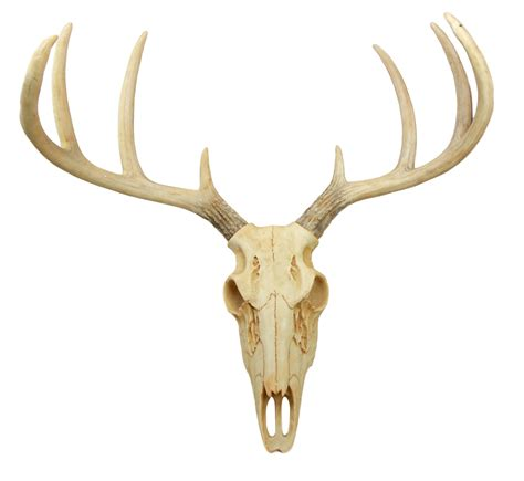 Atlantic Rustic Hunter Deer 8 Point Buck Skull Antler Rack. Kitchen Floor Tiles Cheap. New Wave Kitchen Appliances Review. L Shaped Kitchens With Island. Kitchen Led Light. Kitchen Wall Tiles Design. Under Counter Lighting Kitchen. Tile Floor Patterns For Kitchen. Kitchen Appliances Next Day Delivery