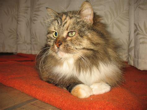 : Pieejamie kaķi