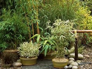 Plantes Pour Jardin Japonais Exterieur : d co jardin zen en 100 id es inspirantes ~ Premium-room.com Idées de Décoration