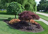 front yard trees 23 Landscaping Ideas with Photos.
